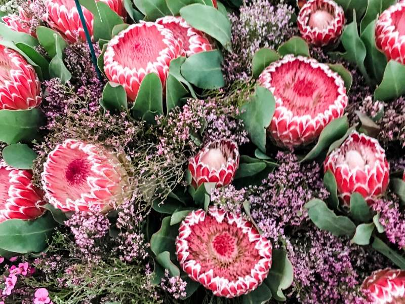 A bunch of Protea flowers