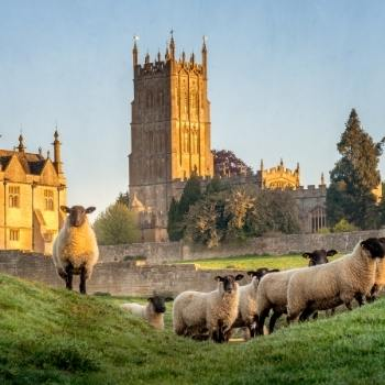 Sheep and a church in the background