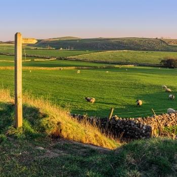 Peak District fields